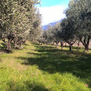Domaine Saint Vincent Huile d'Olives AOP